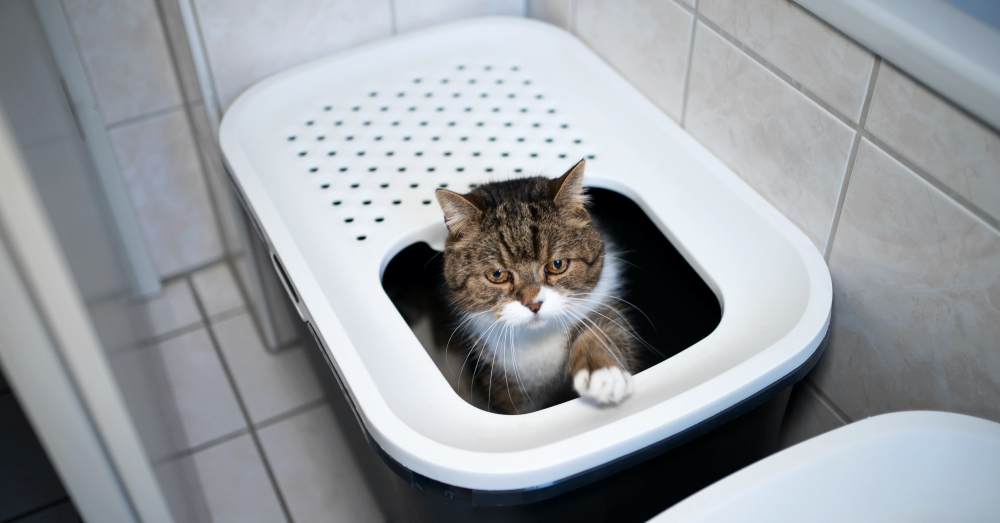 Large cat with head and one paw sticking out of the top of a covered litter box container