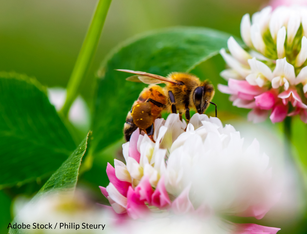 Insecticides targeting crop-damaging pests reduce both the number and diversity of insects in an ecosystem.a
