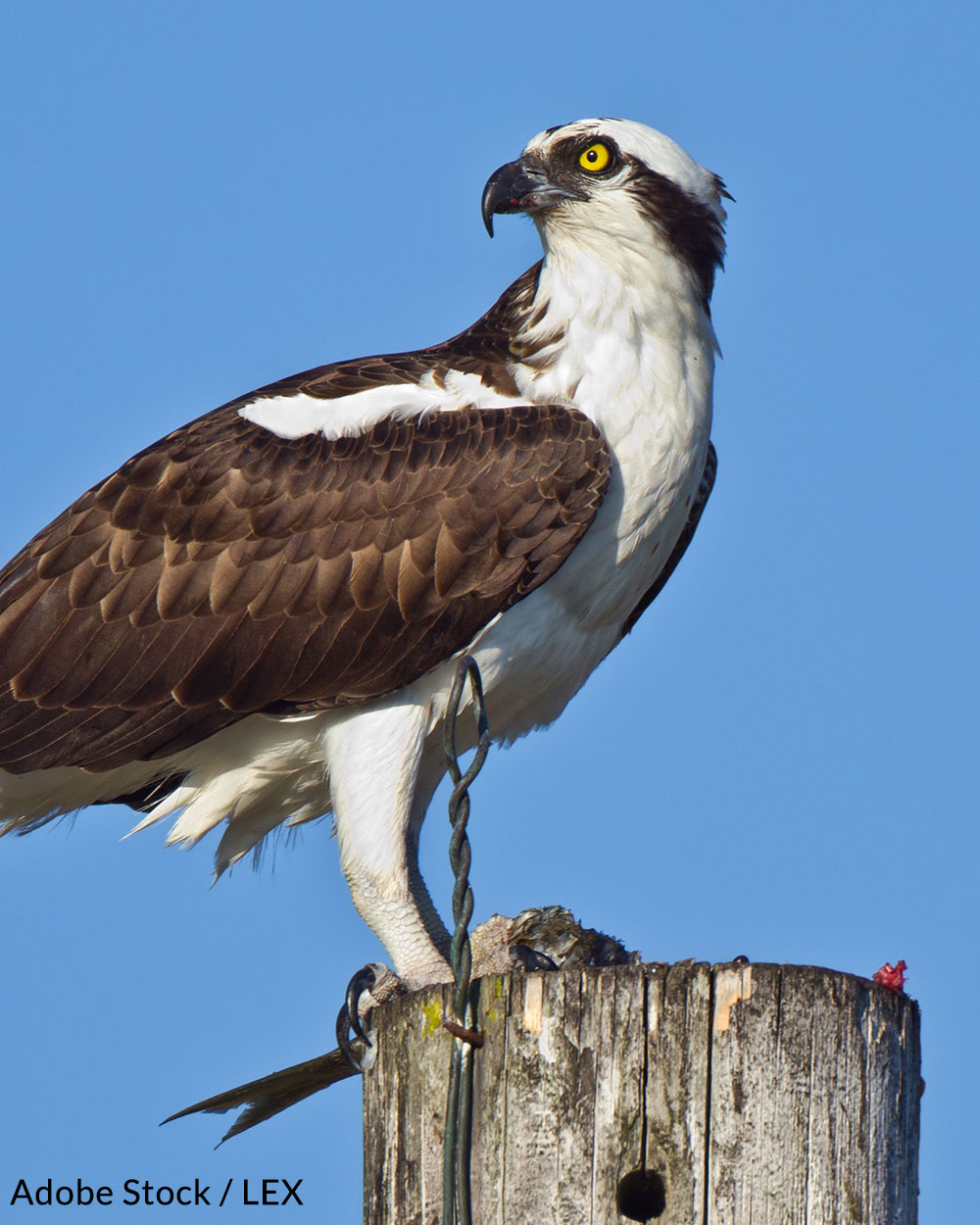 Help us protect the majestic birds of Europe.