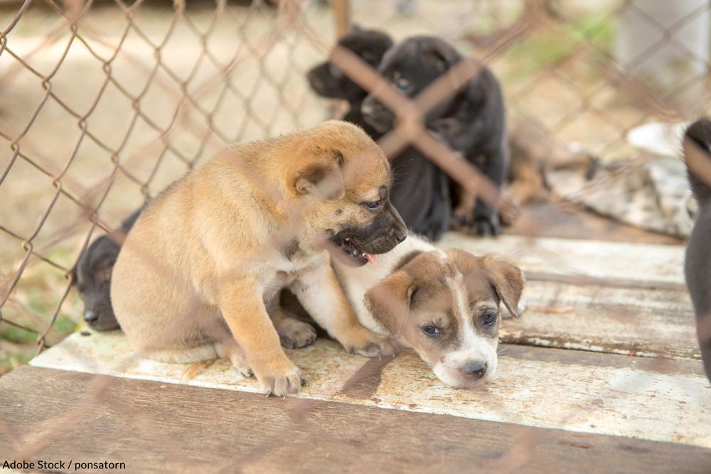 Help end puppy mills in Missouri.