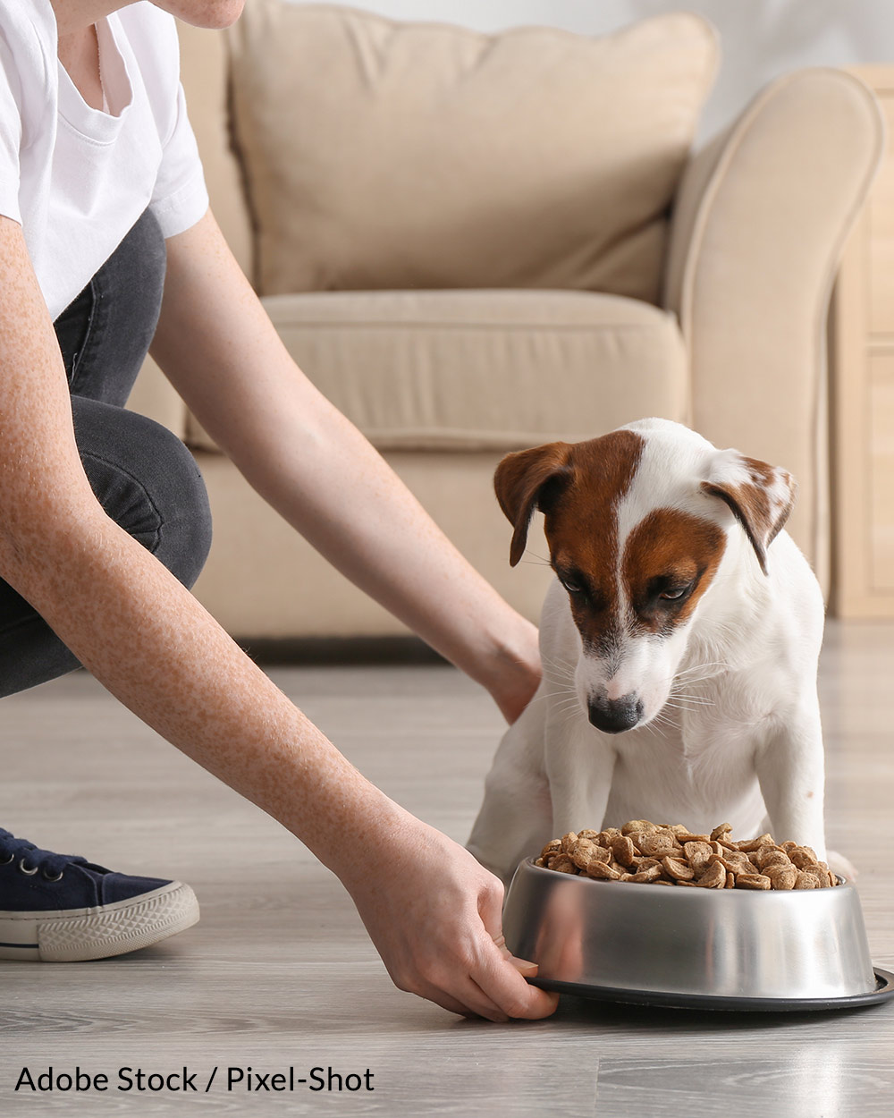 A number of pet foods have been recalled this year because of salmonella contamination.