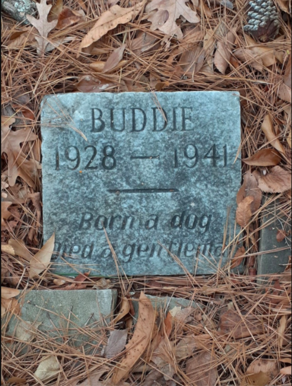 Man Brought To Tears When He Stumbles Upon 80-Year-Old Dog Grave In Louisiana Park