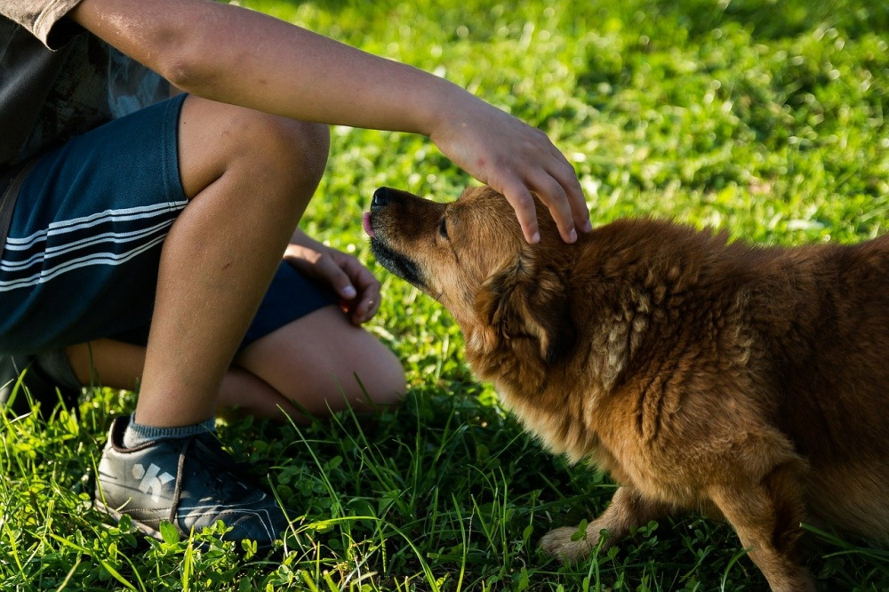 Dogs Get Jealous At The Thought Of Their Owners Interacting With Another Dog, Study Finds