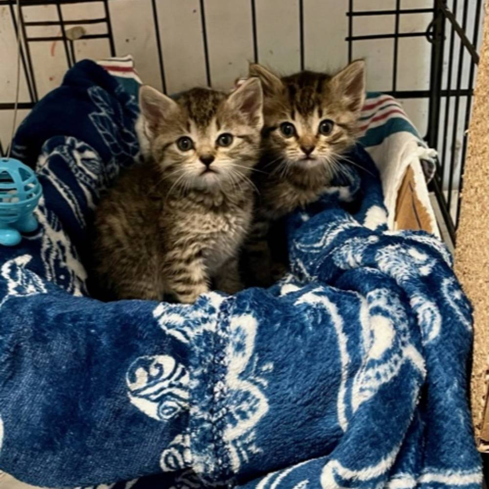 Provide Essentials for Cats & Kittens In Need