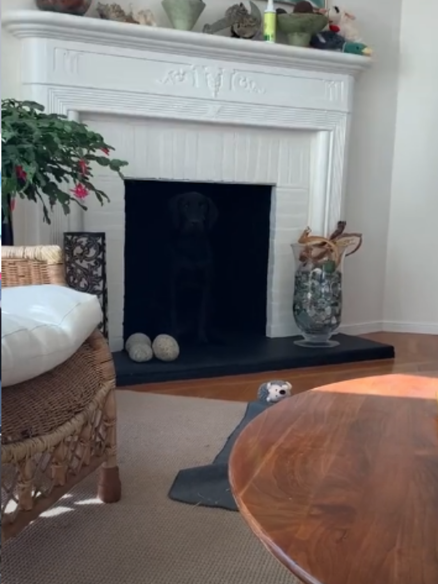 Woman Shares Optical Illusion Of Her Dog That Goes Viral On TikTok