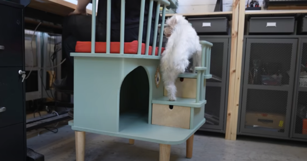 dog walking up stairs of desk chair for pets