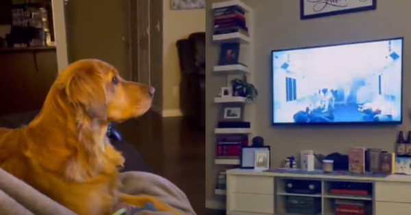 Dog Sees Darth Vader For The First Time And Hides Behind The Couch In Fear