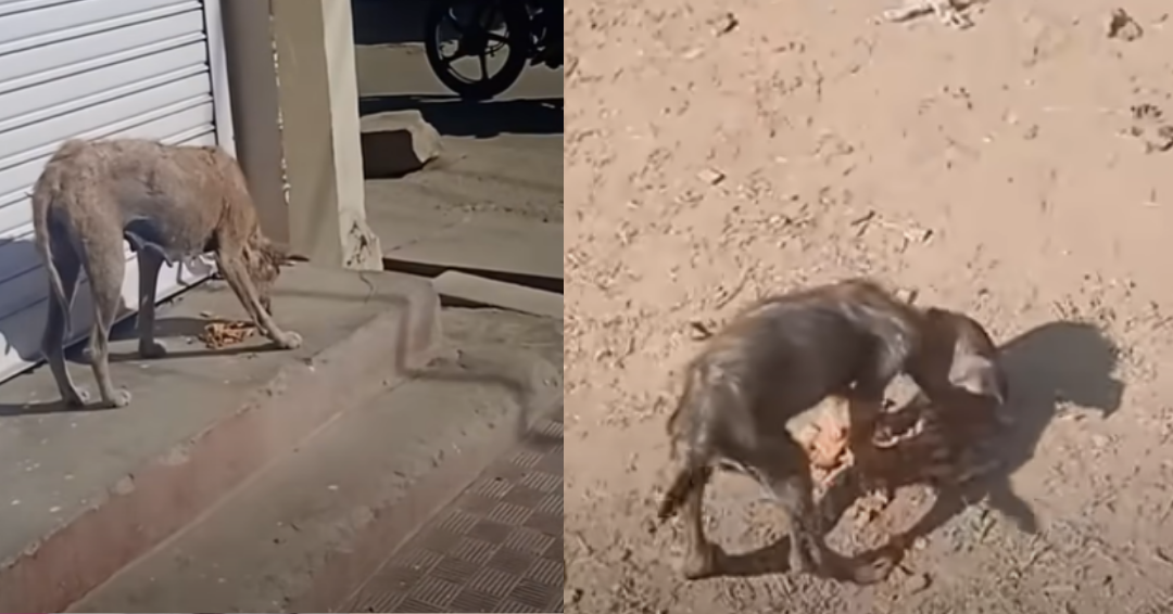 Stray Mangey Dog And Her Puppy Are Given A Second Chance At Life