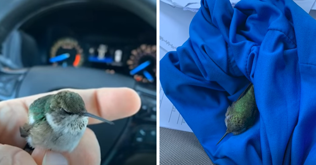 Man Nursed An Injured Hummingbird Back To Life After It Fell To The Ground
