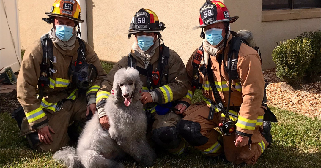 Dog Saves Her Family After Warning Them Of A House Fire