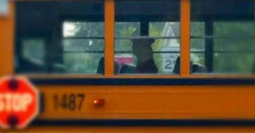 Stray Pit Bull Hopped On A School Bus Looking To Find His Forever Home
