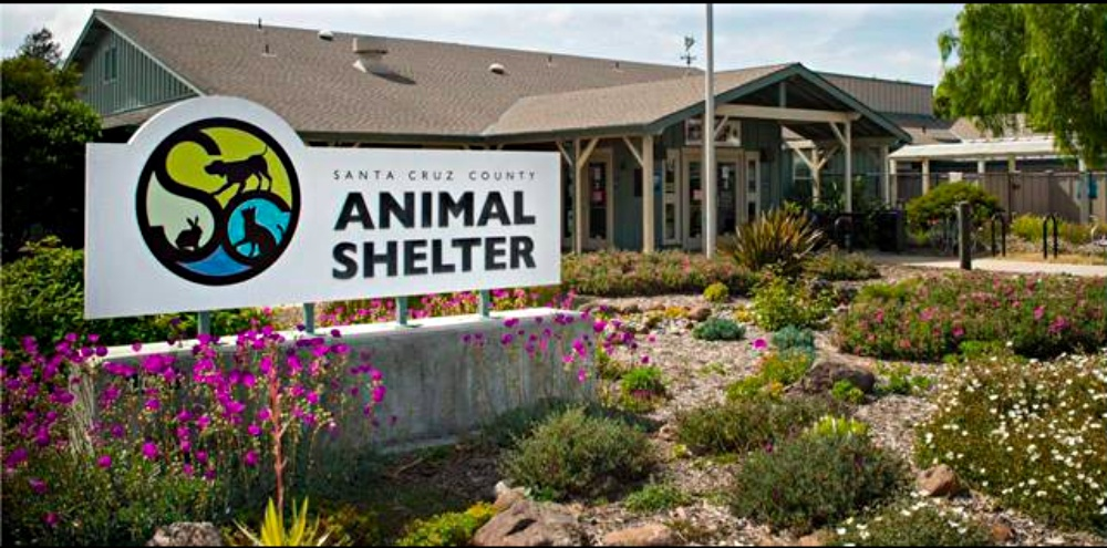 47 Cats and Kittens Rescued From Hoarding Situation In Santa Cruz Are Looking For Forever Homes