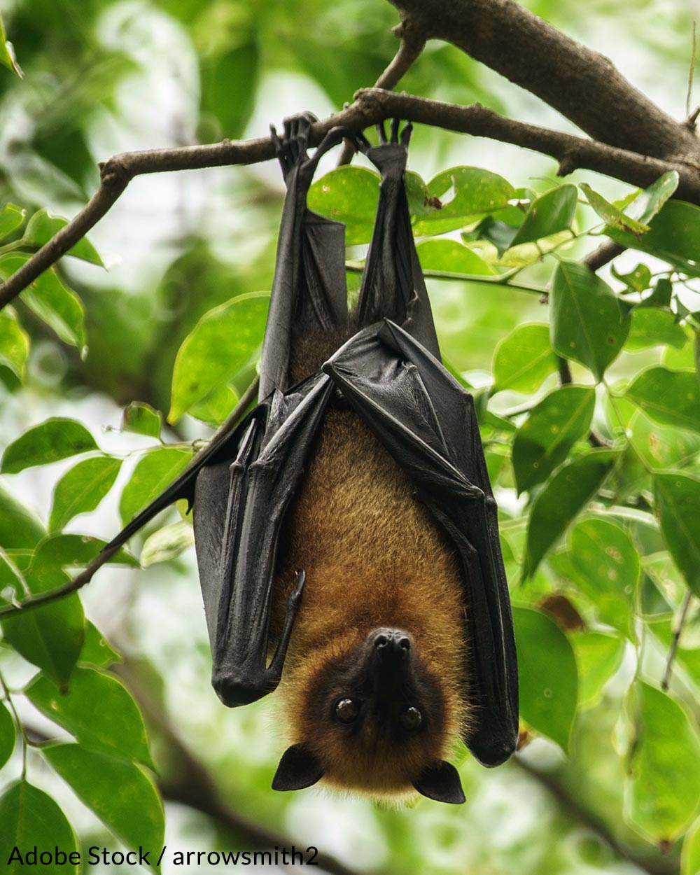 Help us save the bats of North America!