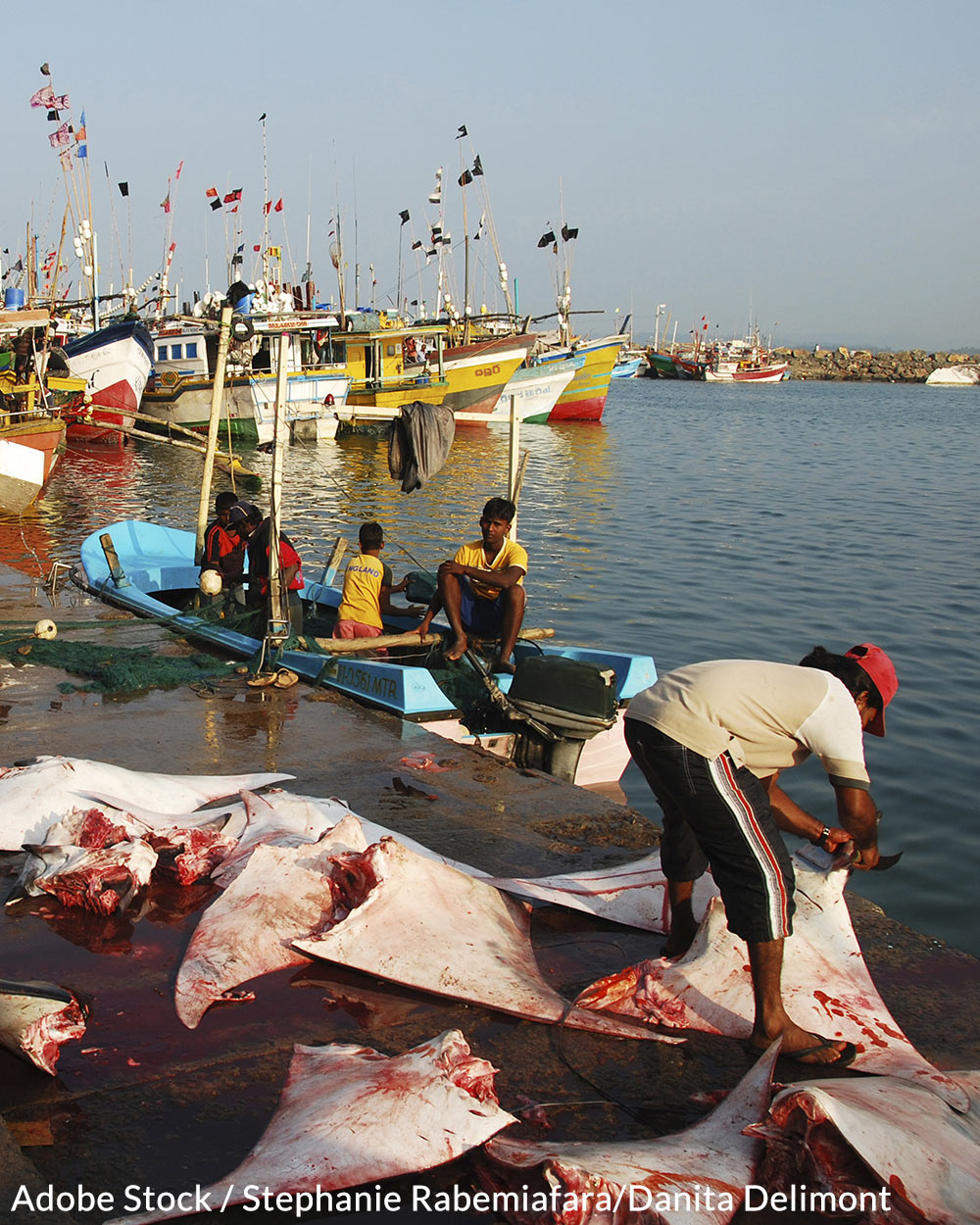 One hundred million sharks are slaughtered every year for their fins.