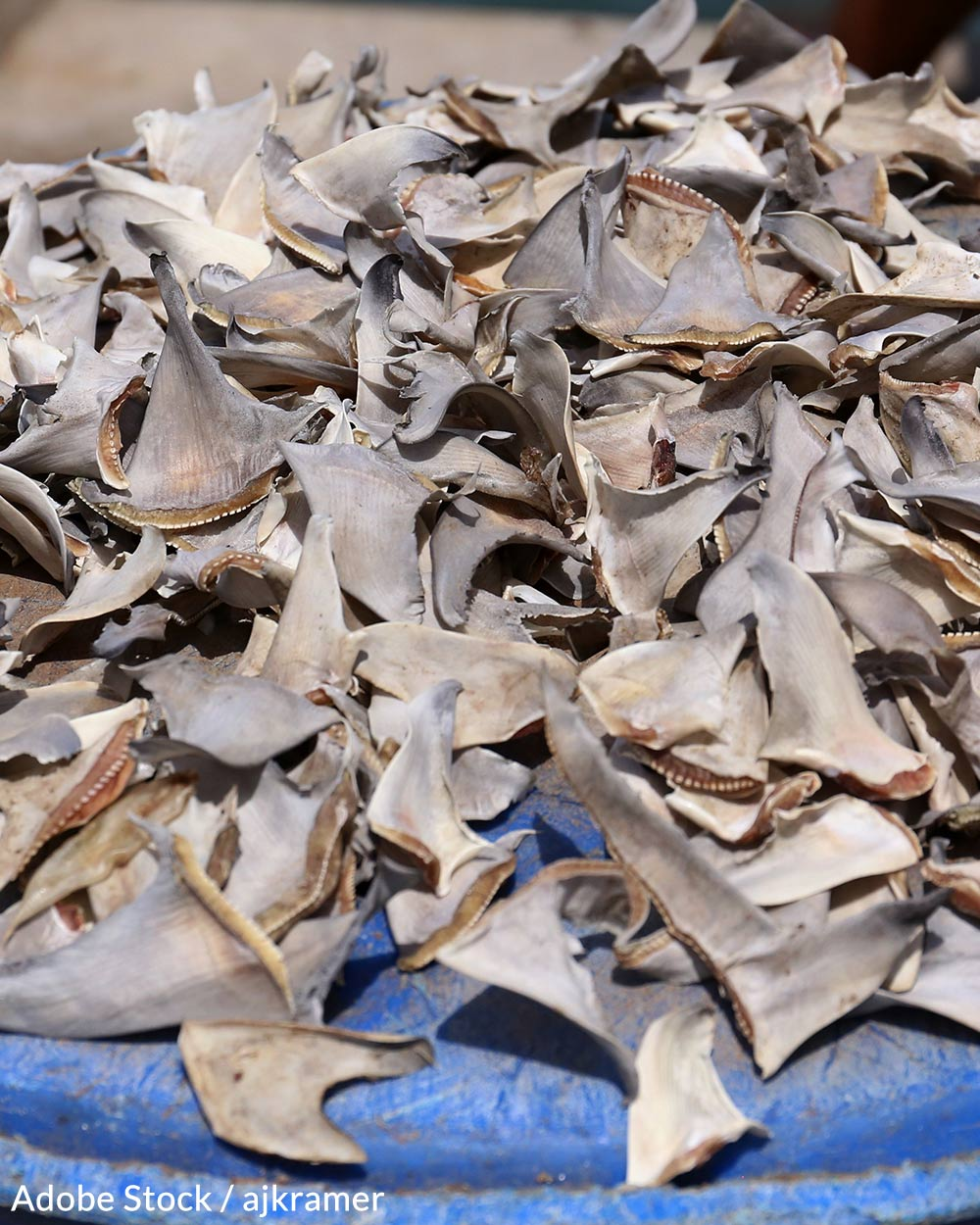 Shark Finning Claims More Lives Every Year Than The Population Of Mexico
