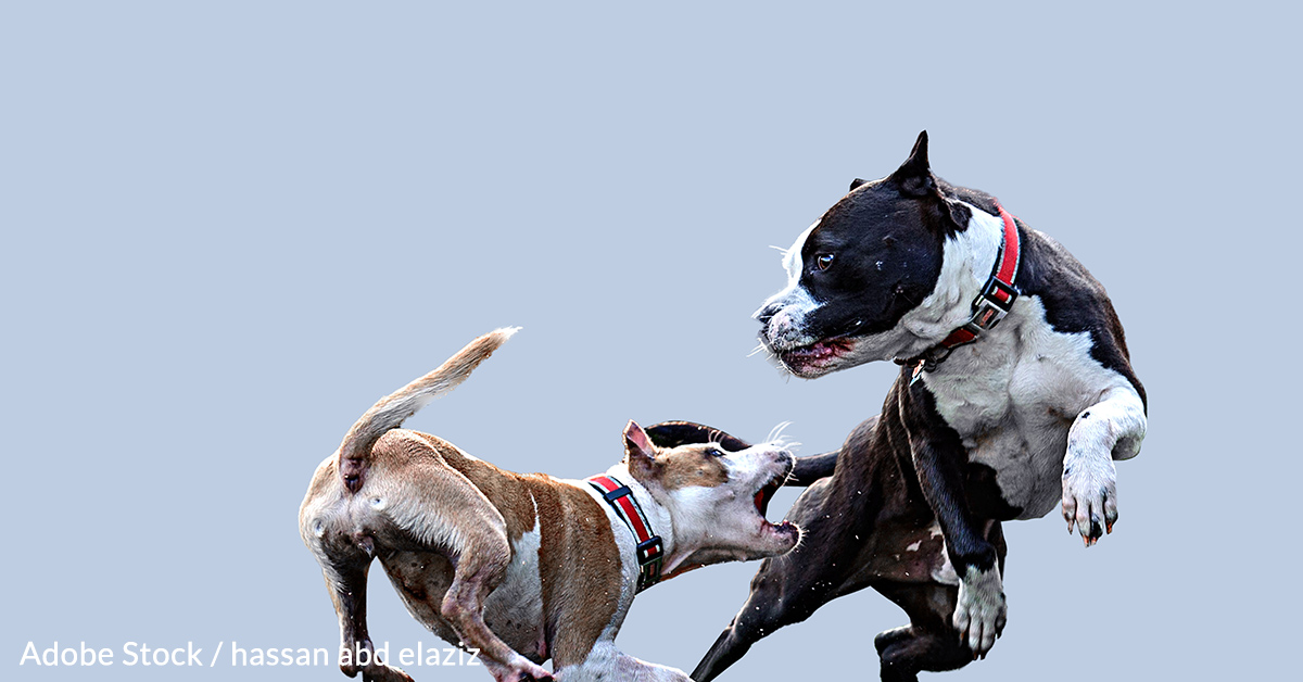 Demand greater accountability from YouTube in removing dogfighting videos.
