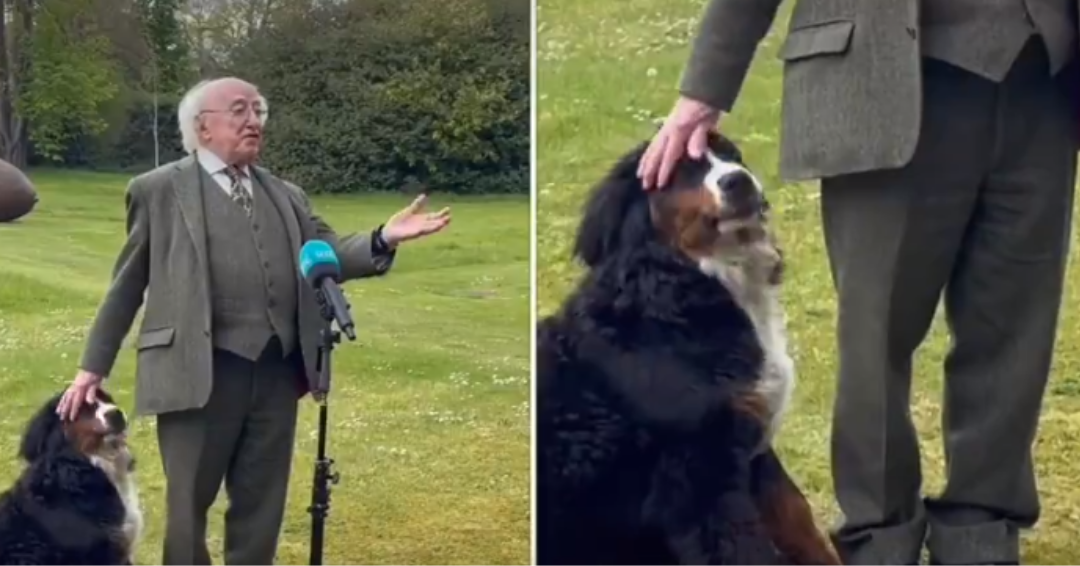 The Irish President's Dog Steals The Show During A Speech