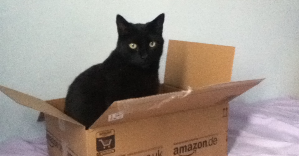 Study Claims That Cats Love All Boxes, Even Imaginary Ones
