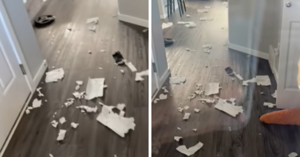 Dog Excitedly Shows His Owner The Mess He Made While She Was Gone