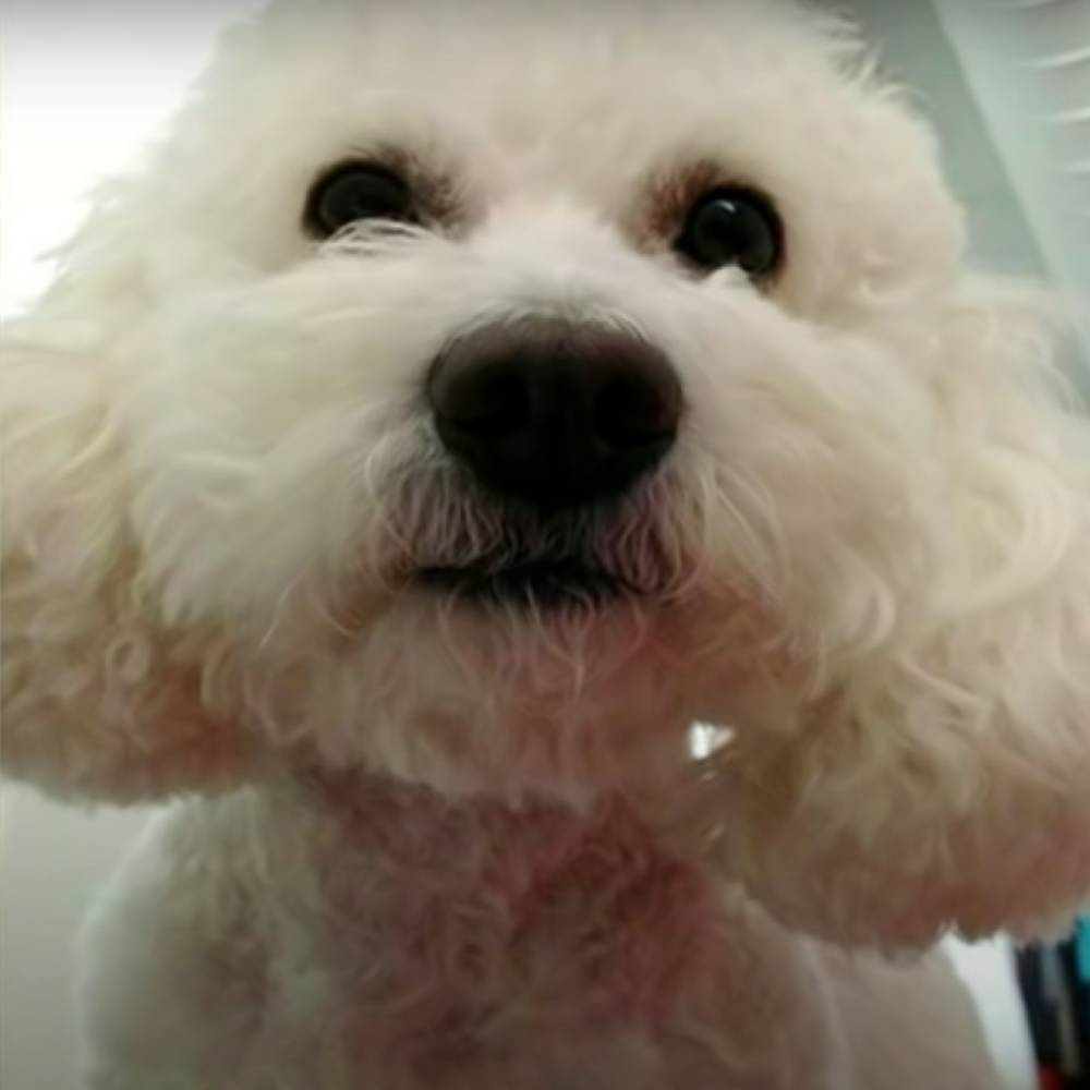 After Another Dog Dies At PetSmart, 4 Employees Charged With Poodle's Needless Death
