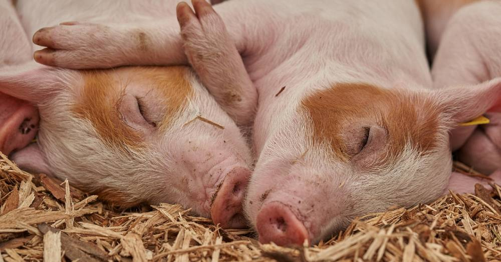 The UK is Set to Recognize Animals as Sentient Beings Under New Animal Welfare Plan