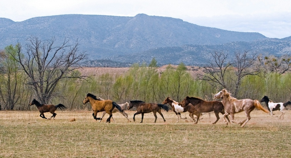 Wild Horses Bring Traffic To A Halt In New Mexico