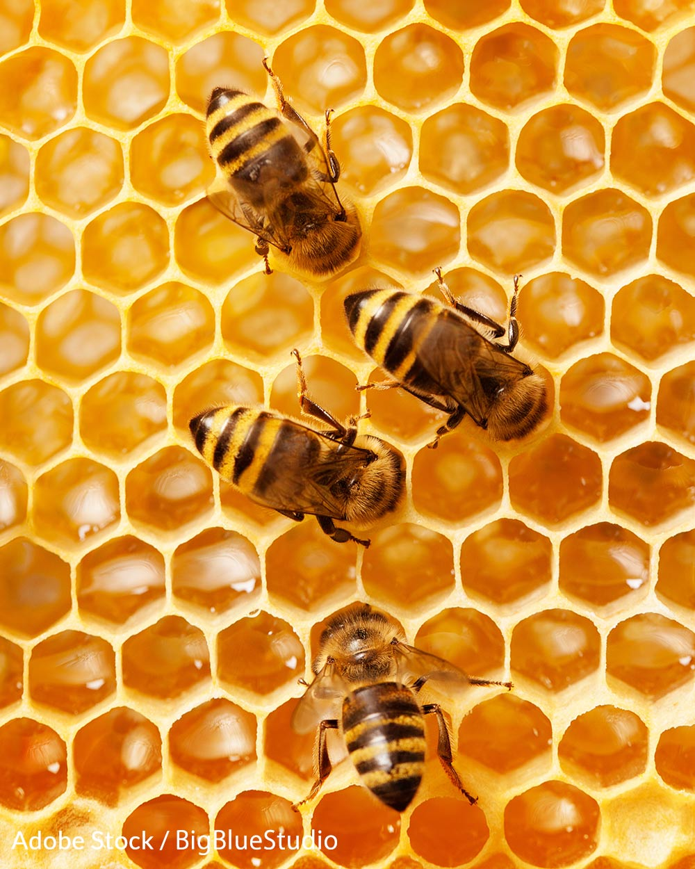 The EPA has released its own guidance on limiting the use of neonicotinoid pesticides around honeybees.