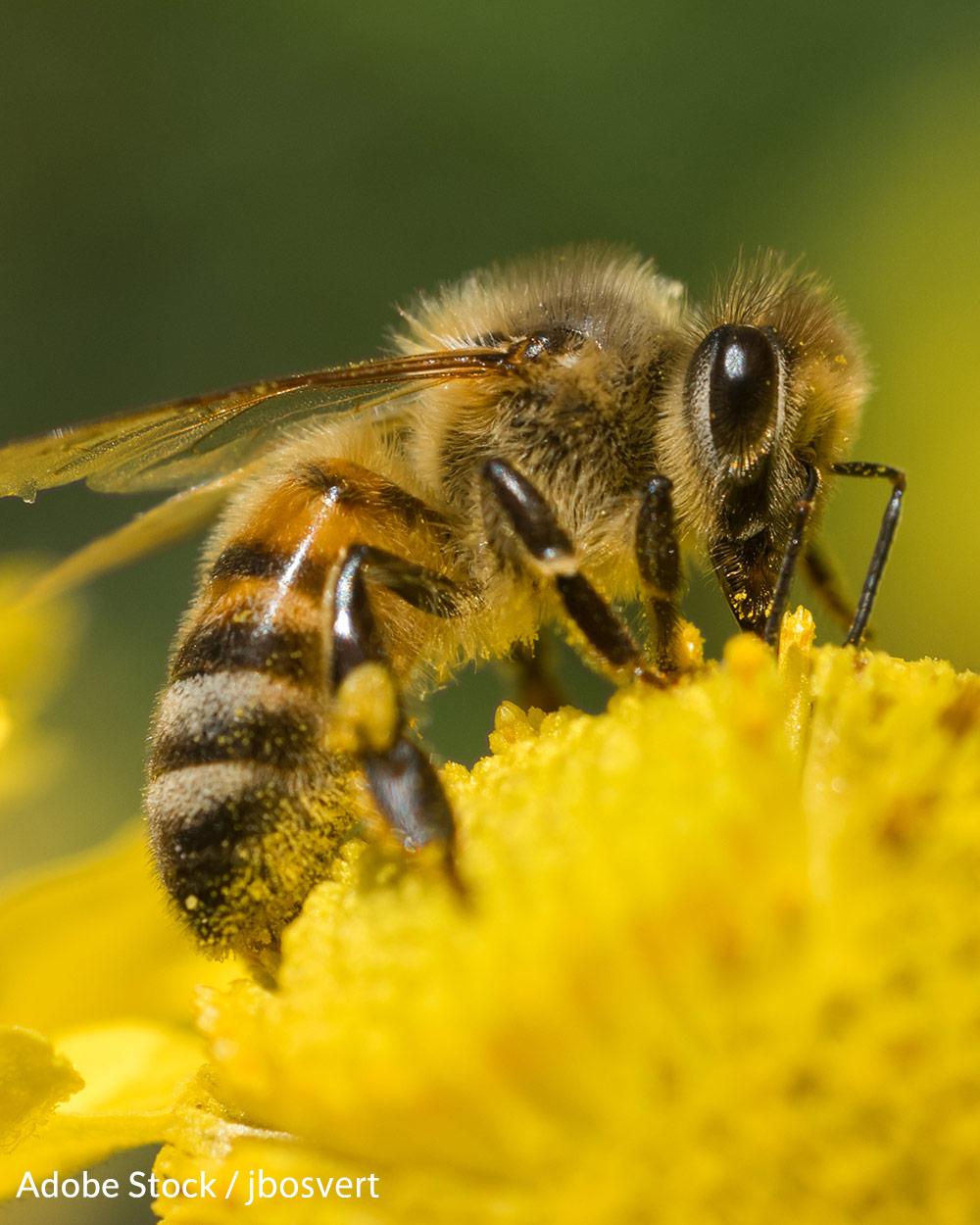 Help us save Earth's honeybees!