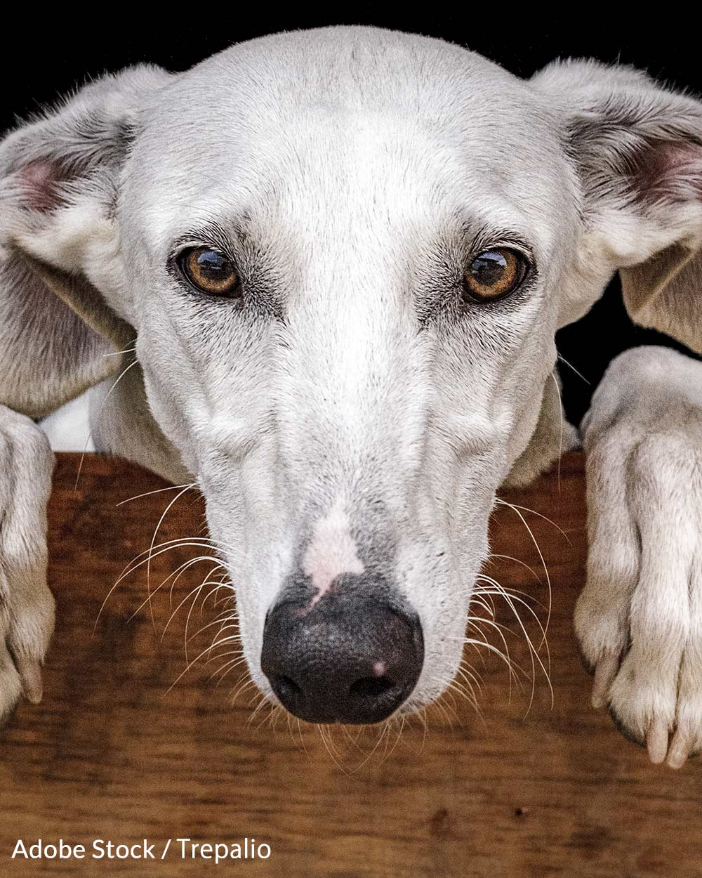 Help us end the violence against Greyhounds!