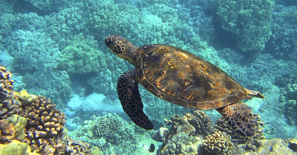 June 16th is World Sea Turtle Day, Learn How to Help These Beautiful Endangered Animals