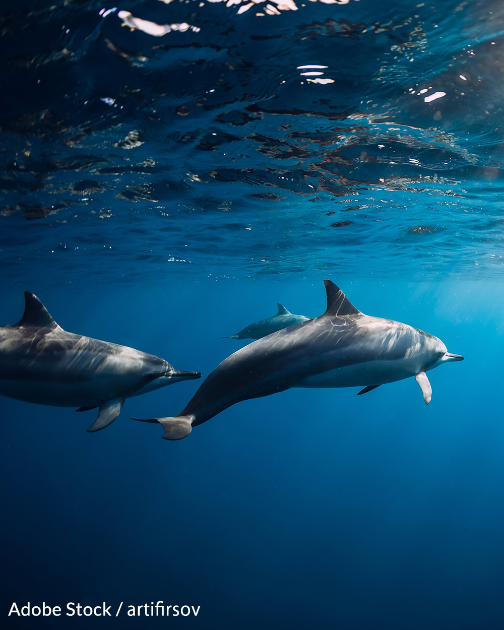 Nursing mothers and their babies are killed when lured into the Cove in Taiji, Japan.