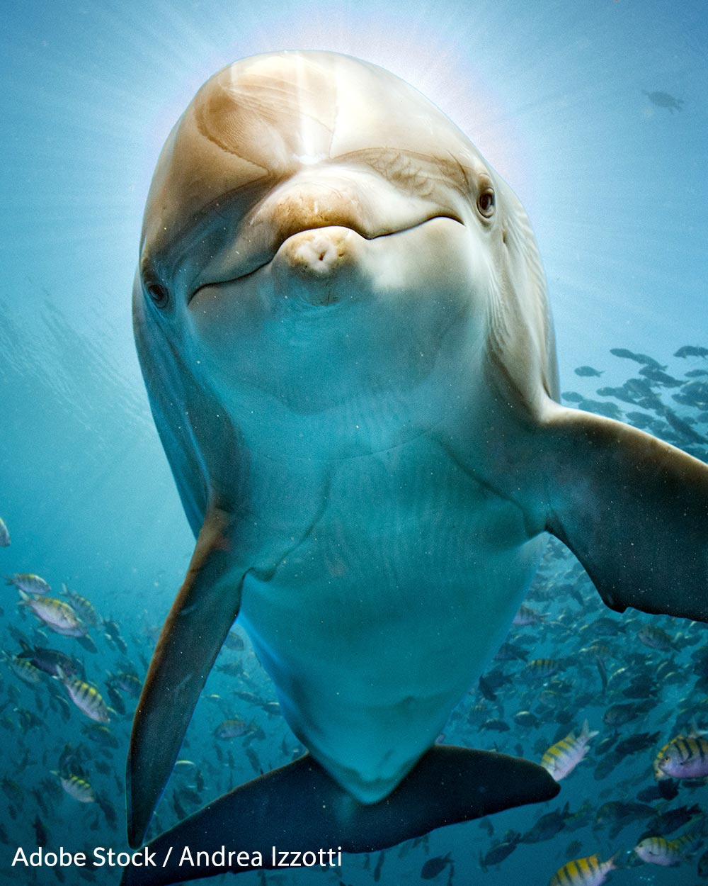 Bottlenose dolphins are herded into the Taiji cove where they are slaughtered.