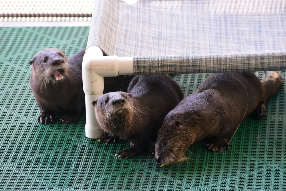 Florida Wildlife Center Looking For Volunteer Fishermen To Help Feed Orphaned Otters