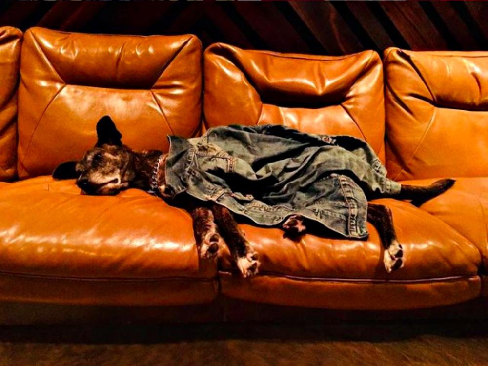 Lenny Kravitz Mourns Death Of Beloved Dog, Leroy Brown
