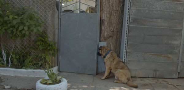 Dog Waits At The Gate After His Family Kicked Him Out Days Earlier