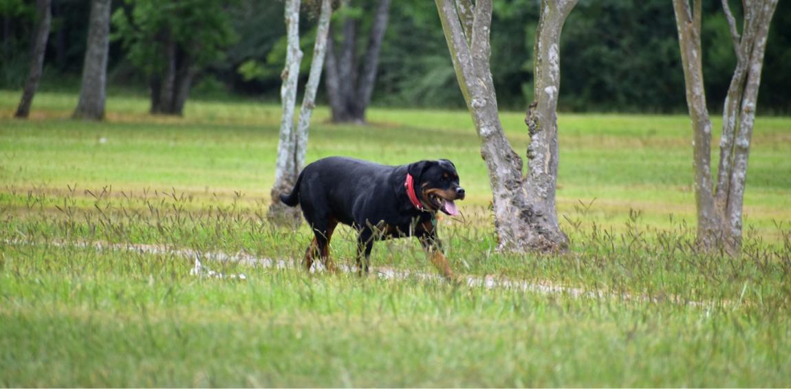 Dog Instinctively Walks Over To Comfort Stranger Who Just Lost His Dog