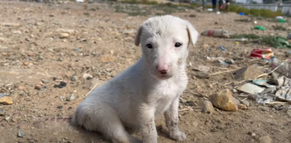 Puppy Whose Tail Was Cut Off With Scissors Finds A Loving Forever Home