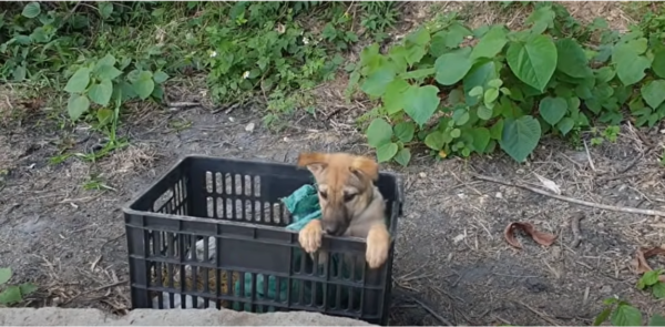 Man Rescues Abandoned Puppy Discarded In A Black Crate
