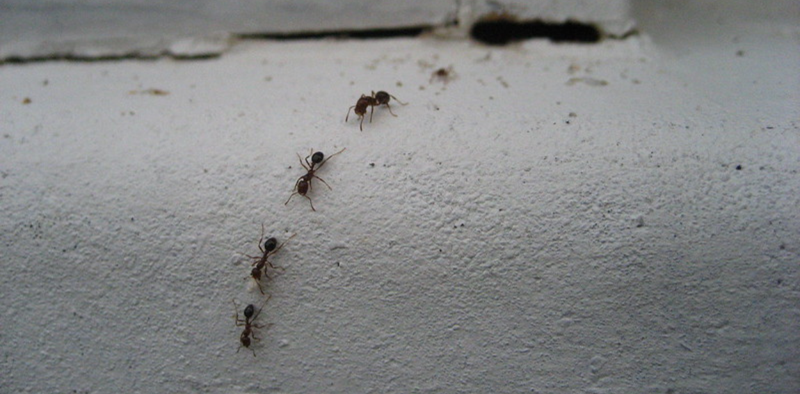 Veterinarian Claims You Can Keep Ants From Your Dog's Bowl By Using Chalk