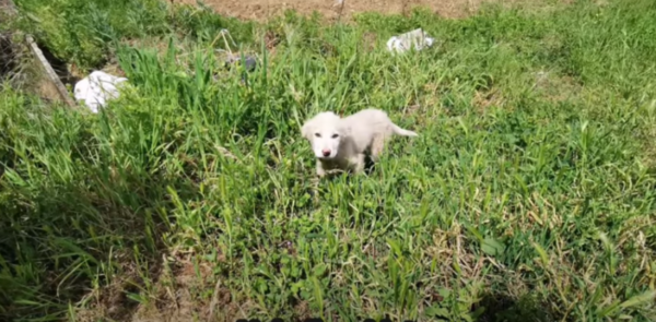 Heroes Rescue Puppy Left To Die In A Field