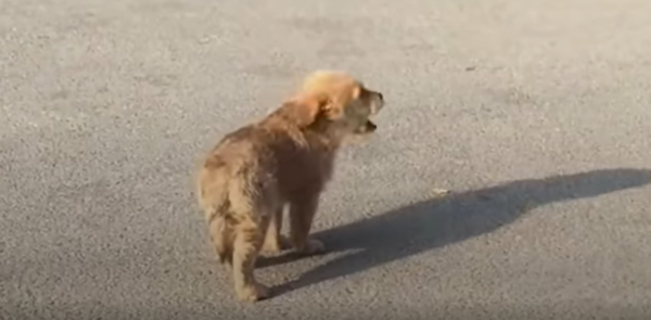 Stray Puppies Searches For Someone To Give Him A Home