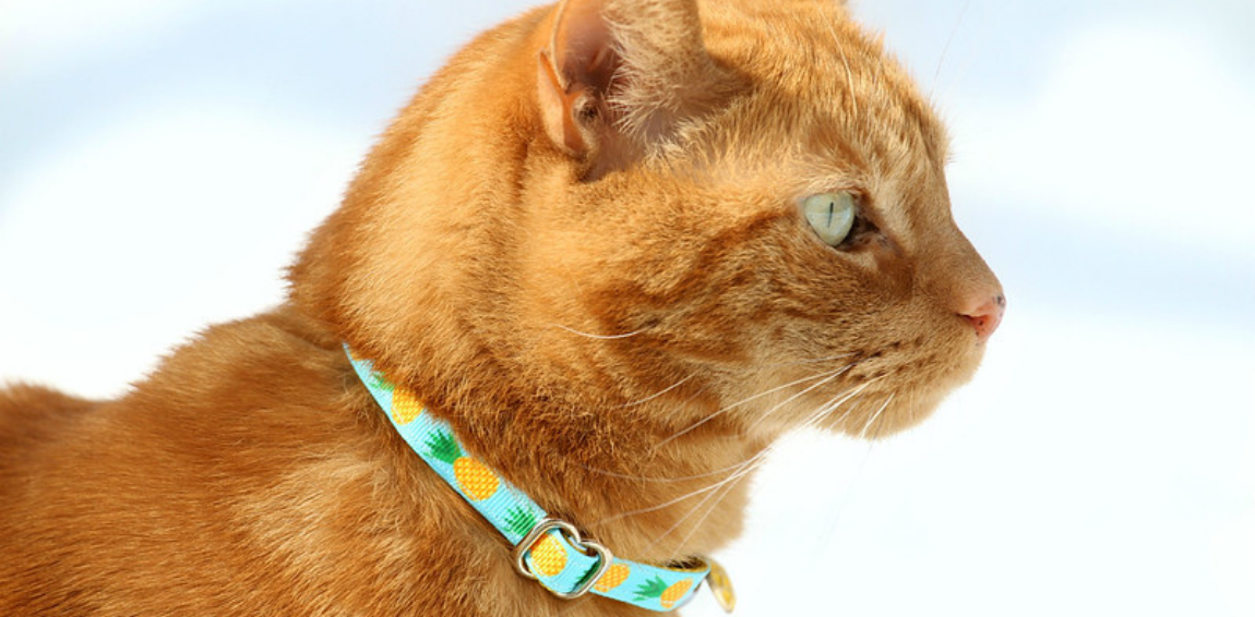 How To Avoid Cat Collar Injuries