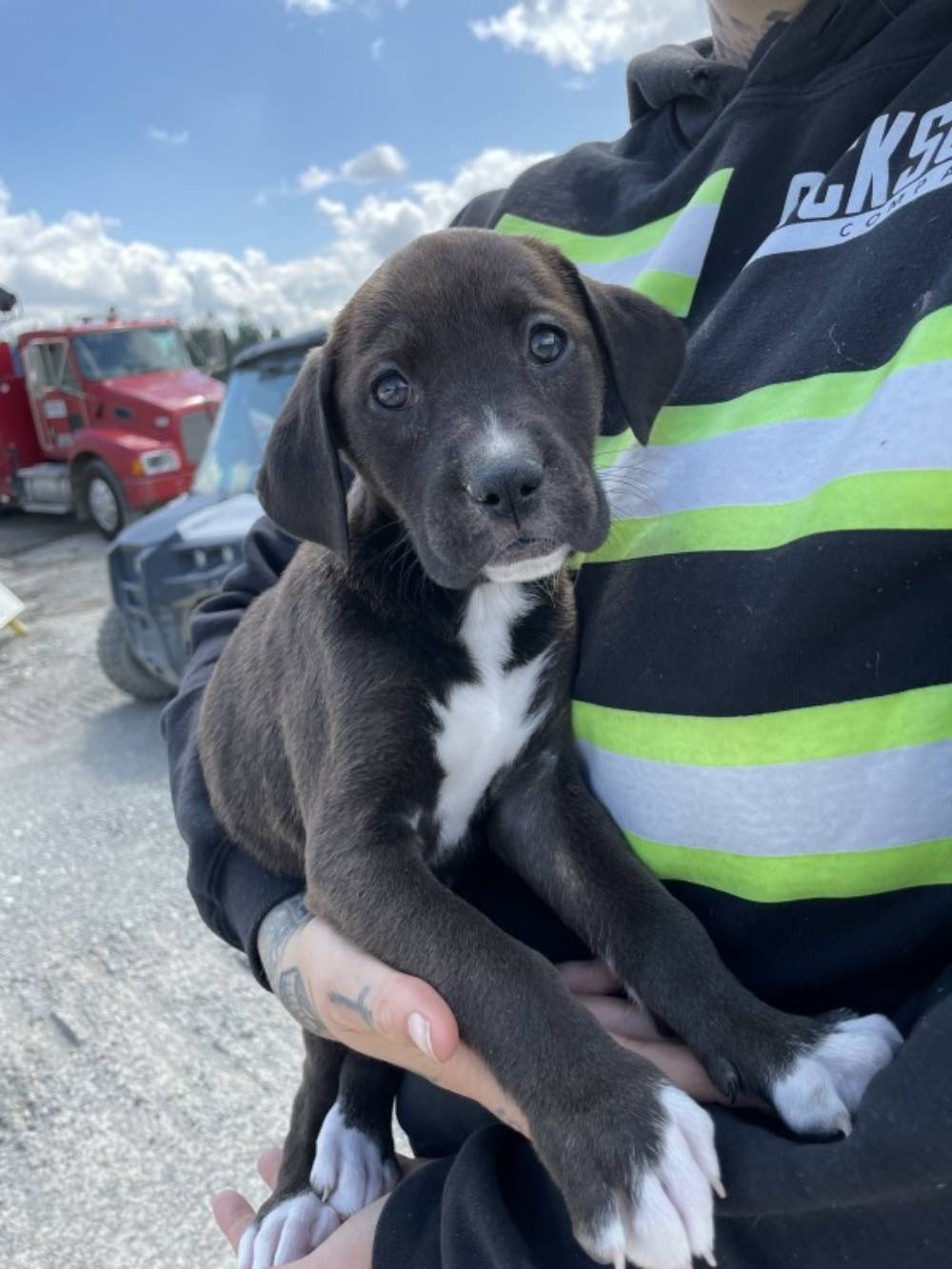 Puppies Saved from Being Crushed at Gravel Pit Are Now Fighting for Their Lives