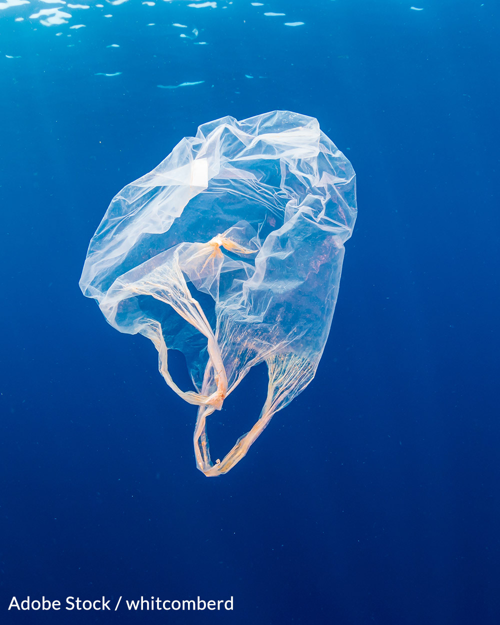 A single plastic bag can take 1,000 years to decompose.