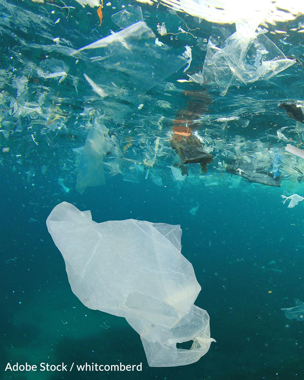 Plastic bags pose a serious threat to marine life.