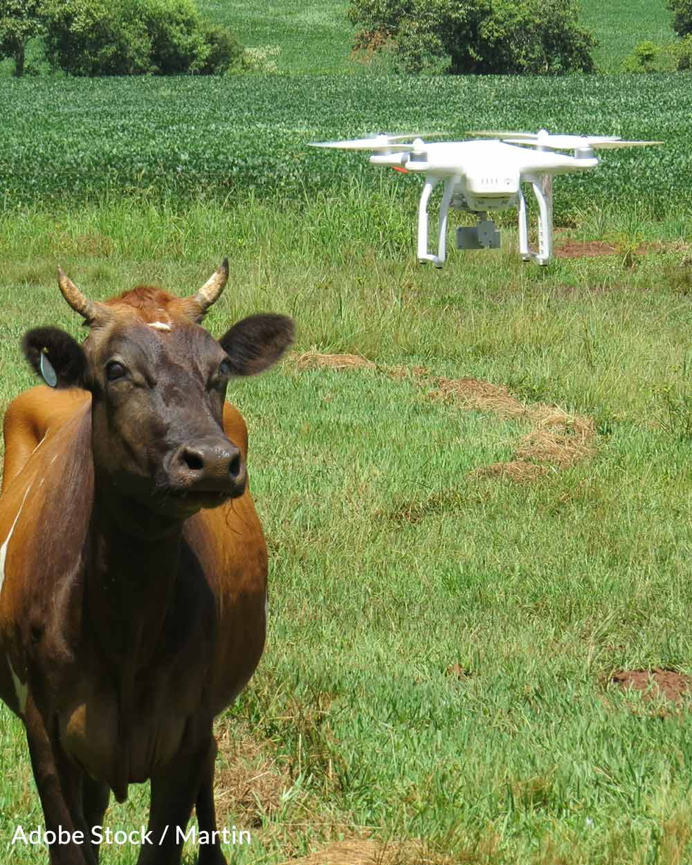 Not all animals are comfortable around drones.