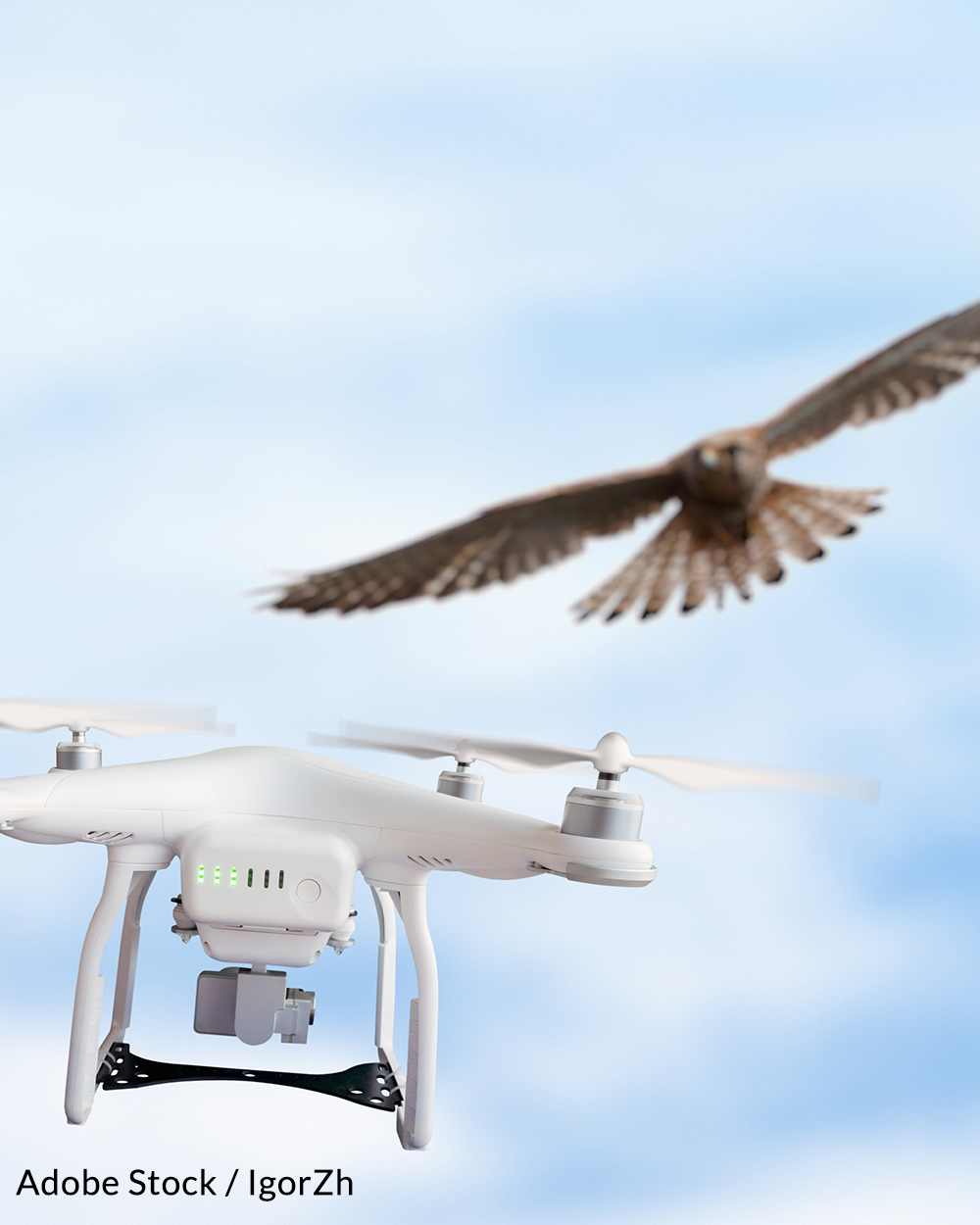 Drone accidents can seriously injure birds.