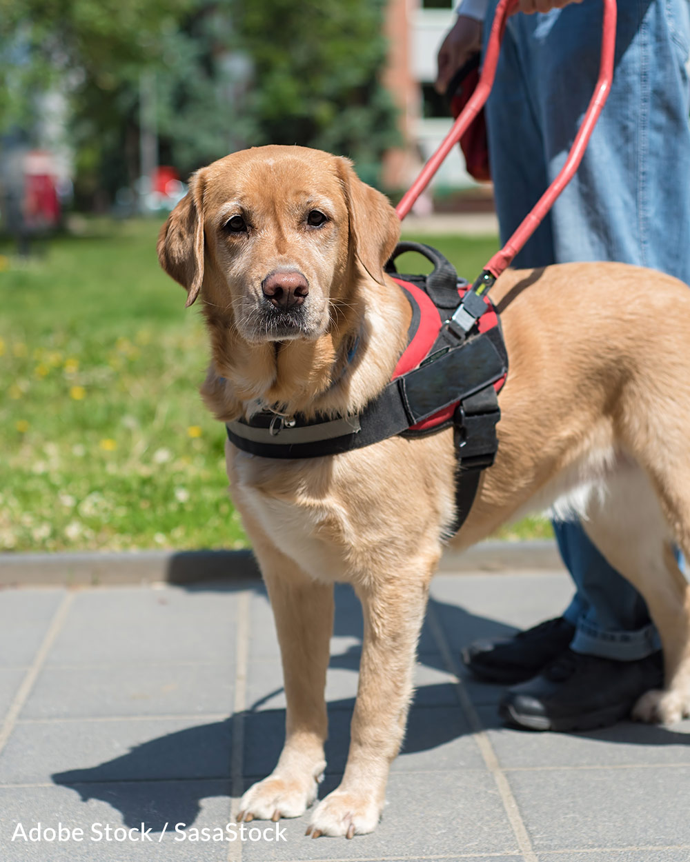 Respect Assistance Dogs and the important work they do.