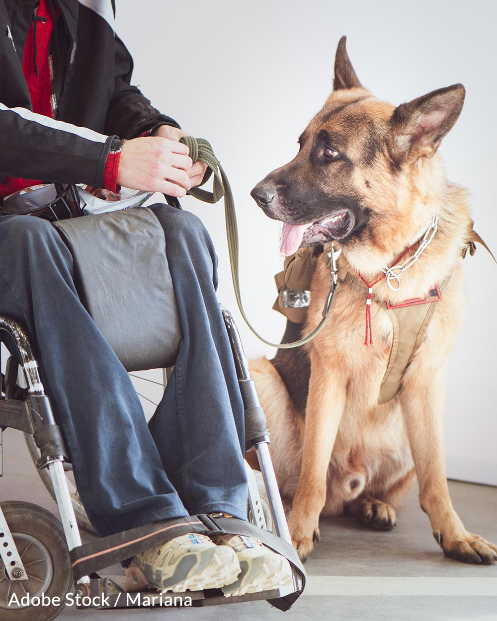 Celebrate Assistance Dogs Day By Taking A Pledge To Respect Their Important Work