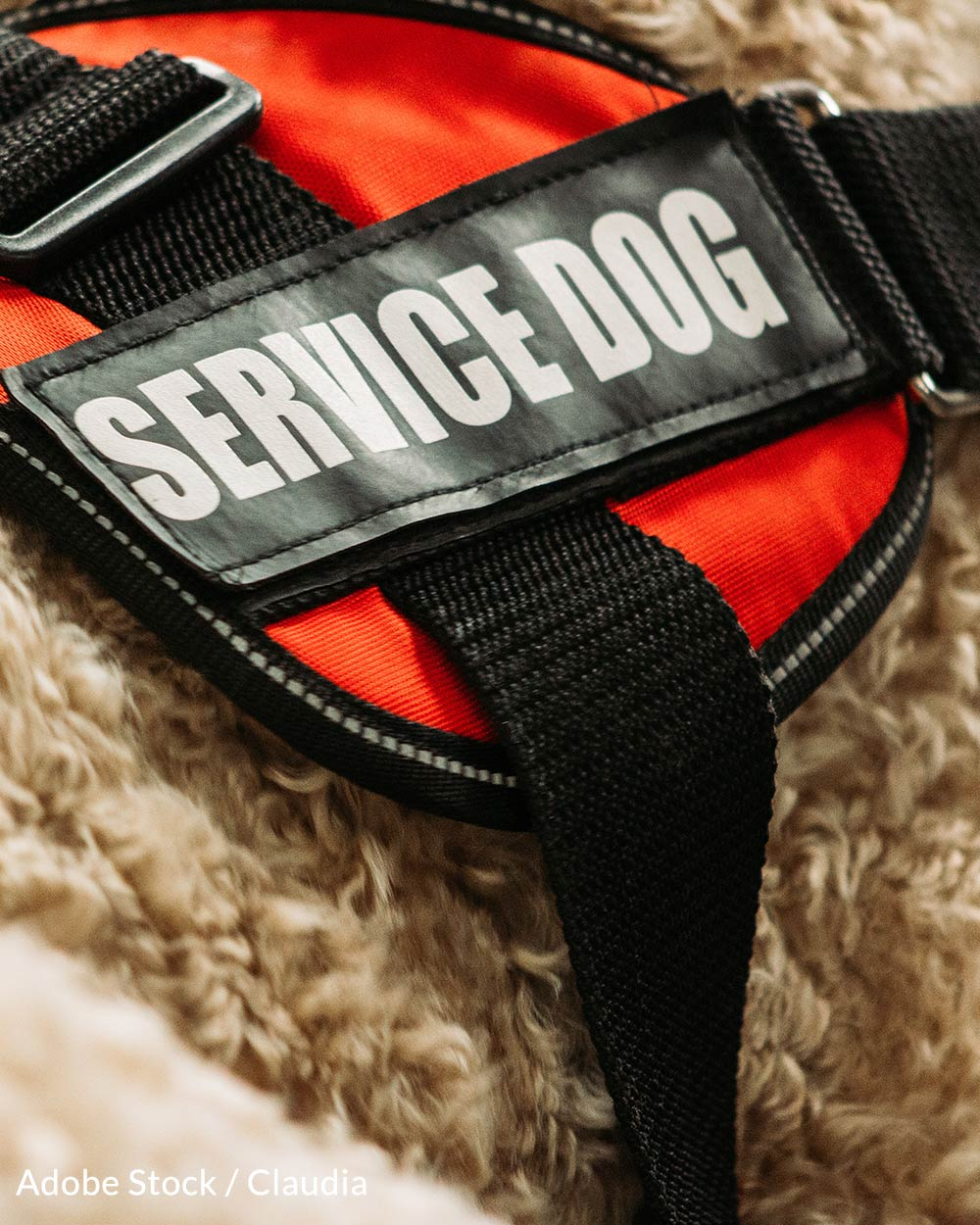 Service Dogs help keep their handlers safe.